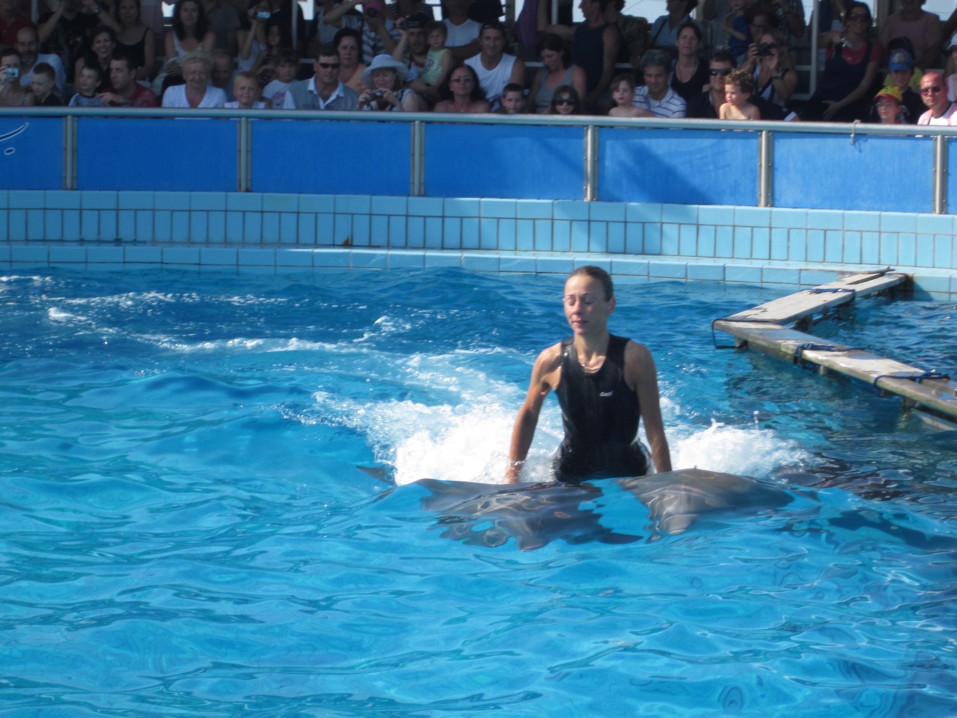 Možnost návštěvy delfinária